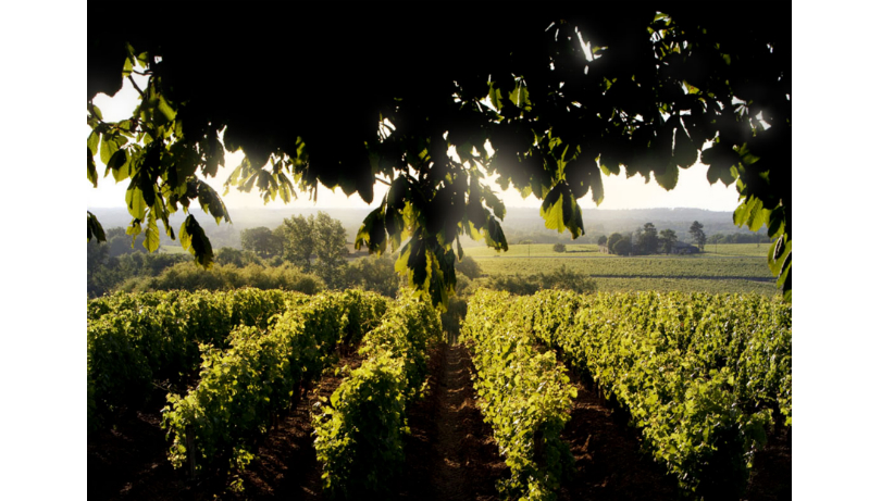 CHATEAU D'YQUEM ESTATE